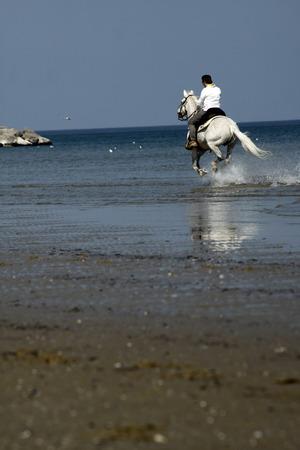 Il cavallo corre verso il mare Archivio Fotografico - 88618455