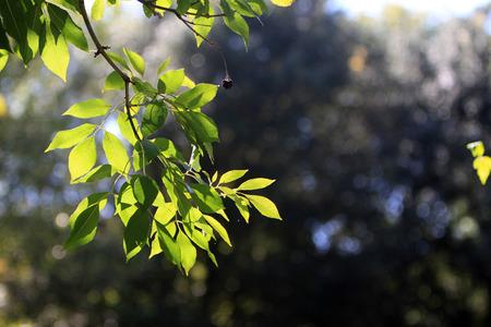 Lascia in autunno Archivio Fotografico - 90271161
