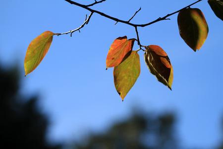 Foglie in autunno Archivio Fotografico - 89523244