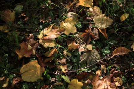 Foglie in autunno Archivio Fotografico - 89523248