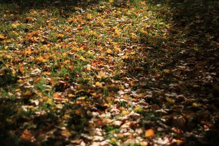 Lascia in autunno Archivio Fotografico - 90271164