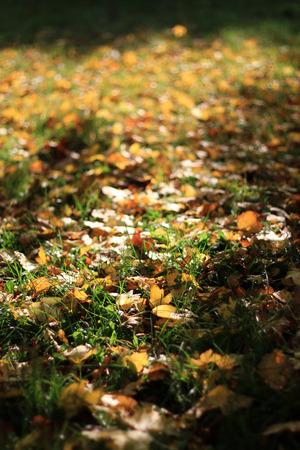 Lascia in autunno Archivio Fotografico - 90271167
