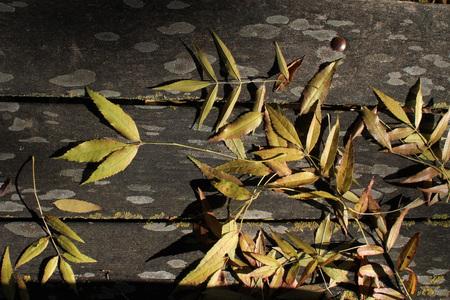 Stagione autunnale - legno e foglie secche Archivio Fotografico - 89619272