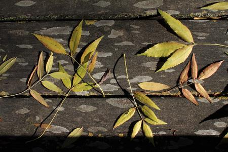 autumn season - wood and dry leaves Banco de Imagens
