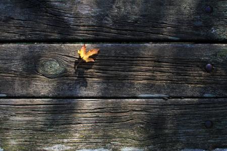 Stagione autunnale - legno e foglie secche Archivio Fotografico - 89619274