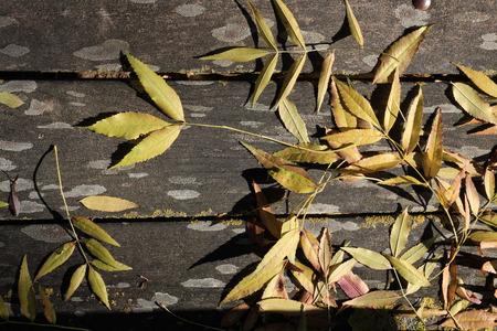 Stagione autunnale - legno e foglie secche Archivio Fotografico - 89621390