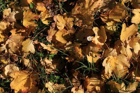 Stagione autunnale - foglie secche gialle Archivio Fotografico - 89621391