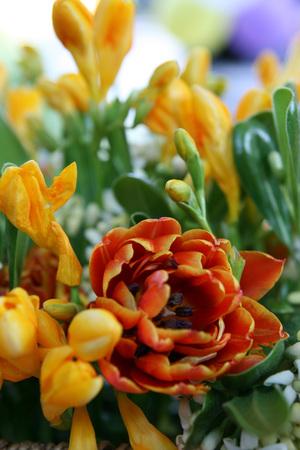 Macro of colored flowers Banco de Imagens