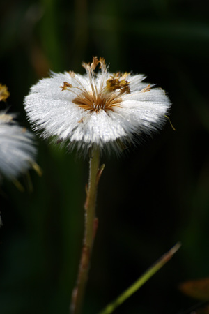 macro of white flower Banco de Imagens