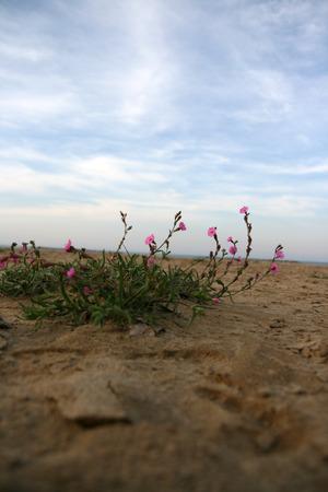 Fiori viola sulla spiaggia Archivio Fotografico - 92098364