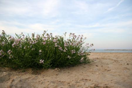 purple flowers on the beach