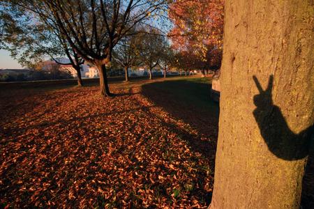 Ombra della mia mano su un albero nella stagione autunnale Archivio Fotografico - 91269110