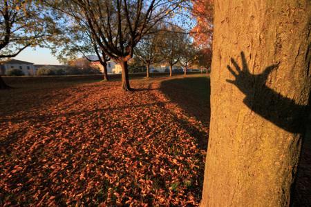 shadow of my hand on a tree in autumn season