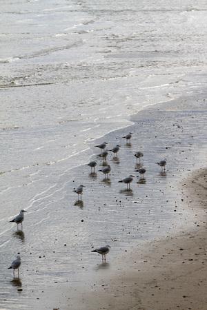 reflection of seagulls on the beach - Adriatic Sea Archivio Fotografico