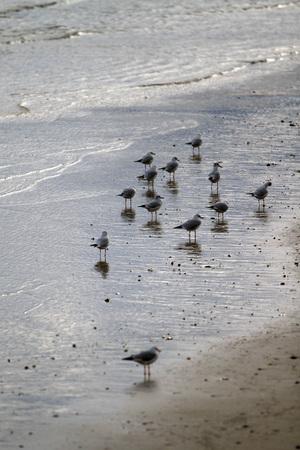 Riflessione dei gabbiani sulla spiaggia - Mare Adriatico Archivio Fotografico - 91730293