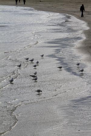 reflection of seagulls on the beach - Adriatic Sea Banco de Imagens