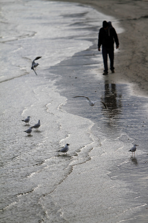 Reflection of seagulls on the beach - Adriatic Sea