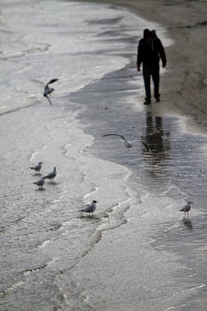 Riflessione di gabbiani sulla spiaggia - Mare Adriatico Archivio Fotografico - 91793076