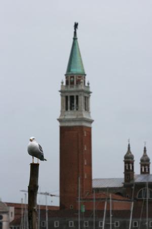 seagull in Venice (winter season) Archivio Fotografico