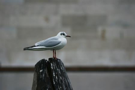seagull in Venice (winter season) Banco de Imagens