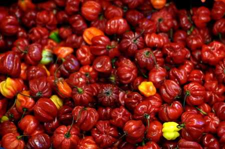 red chilli: Red Chilli Stock Photo