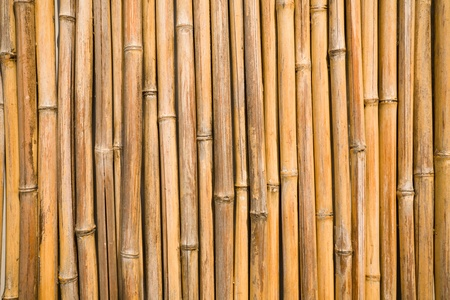 bark: quality natural bamboo background