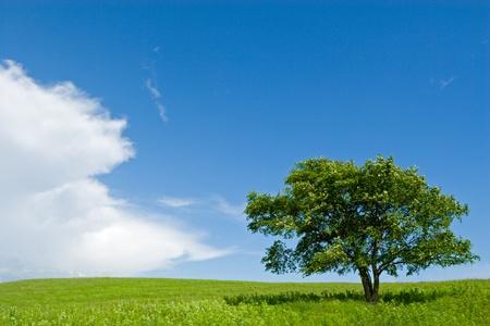 soledad: �rbol solitario en colinas.