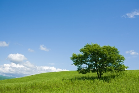 grass plot: Summer. A lonely tree. Foothills.Strong wind.