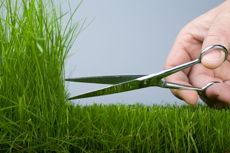 cut grass: The hand mower cutting scissors a grass (natural)