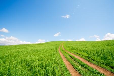 earth road: Terra strada per hills.Summer.