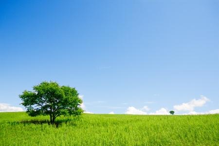 Twee bomen in een open veld Stockfoto