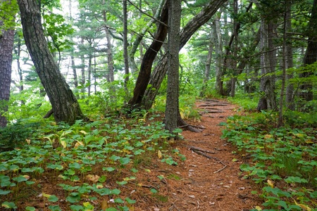 national forest: Path on the Petrova island. State Nature Reserve Lazovskiy. Primorsky Kray. Russia. Stock Photo