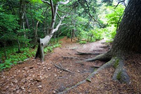 Path on the Petrova island. State Nature Reserve Lazovskiy. Primorsky Kray. Russia. photo
