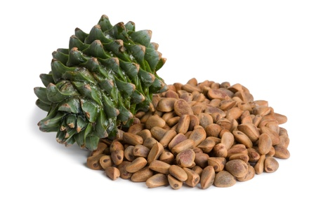 siberian pine: Korean pine cone and nuts.