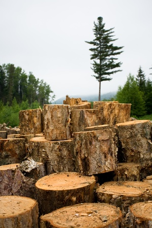 chock: Deforestation. Ecology. Wood sawn log on to the fire. Coniferous forest. Stock Photo