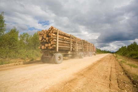 timber harvesting: Forest industry.Trailer truck loaded with wooden beams traveling on a dirt road.