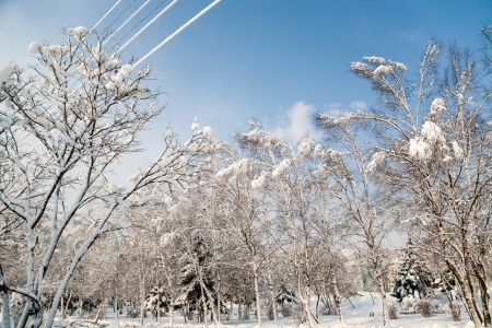 City park after a snowfall. Wires in the snow. photo