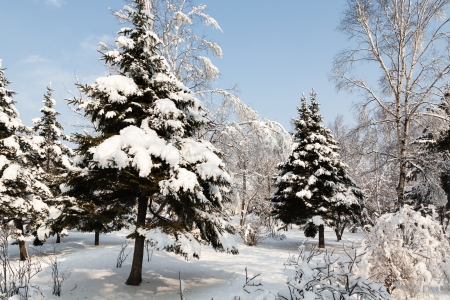 Сity park on a sunny day after a snowfall. photo