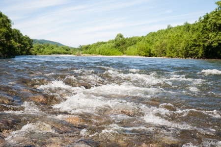 riverbed: Beautiful summer landscape with the river.
