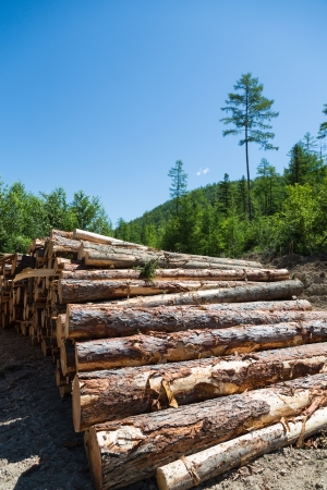 Stacks of logs at a forest logging site on a sunny day. photo