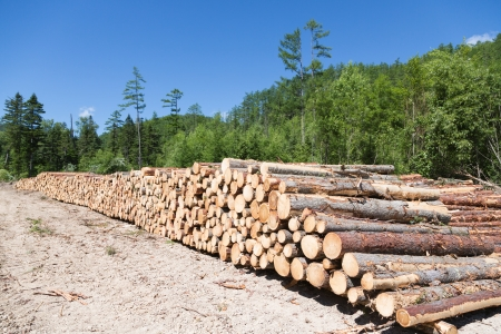 Stacks of logs at a forest logging site on a summer day. photo