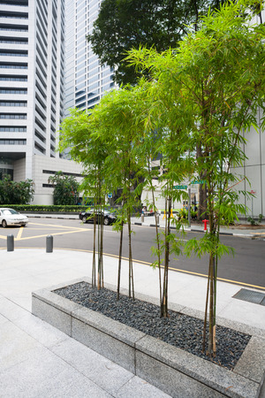 Bamboo decorative vases on the street in Singapore. photo