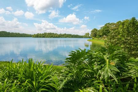Upper Seletar Reservoir in Singapore in november.