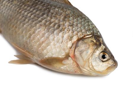 carassius gibelio: Front of the Crucian carp (Carassius auratus gibelio) isolated on white
