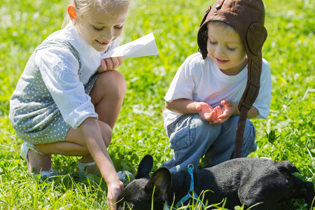 childen: Happy kids playing with the dog (French bulldog) on the grass. Brother and sister.