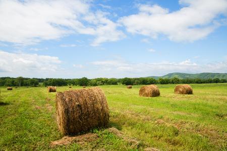 lejano oriente: Montones de heno en rollos se encuentran en los campos del prado en pendiente. Extremo Oriente, Rusia.