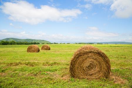far east: Haystacks in the field in summertime. Far East, Russia.