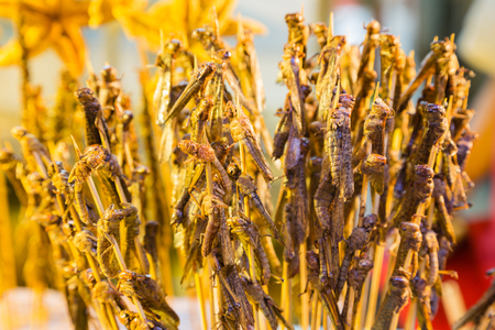 grasshoppers: Grasshoppers on skewers cooked for food. Asian exotic cuisine.