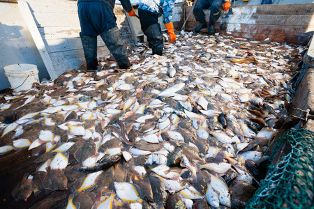 trawler: Caught sea fish on the deck of a fishing trawler. Stock Photo