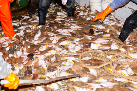 commercial fisheries: Fishermen caught fish processed on the deck at night